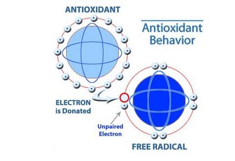 anti-oxidant.JPG