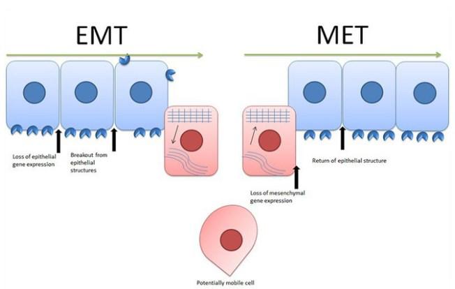 chuyen-doi-EMT-MET.jpg