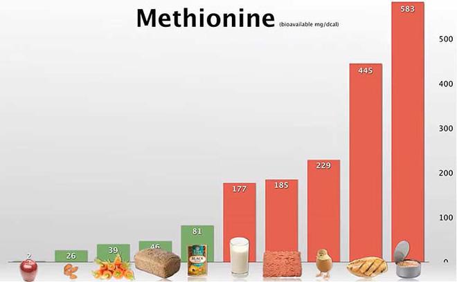 thuc-pham-chua-Methionine.jpg