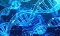 Các nhà khoa học Nga đã phát triển một loại vắc-xin chống lại herpes