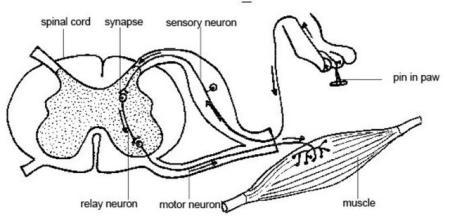 Các thành phần dây thần kinh dưới da khiến bạn cảm thấy ngứa ngáy.