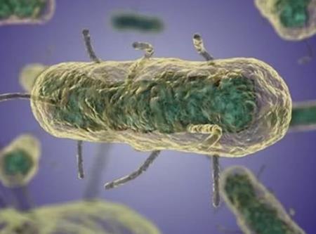 Trực khuẩn Yersinia pestis. Ảnh: MicrobeWiki