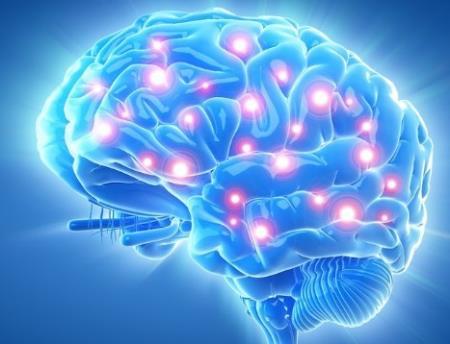 Khi suy nghĩ, bộ não người tiêu thụ bao nhiêu calo?
