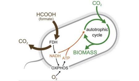 Cơ chế lấy CO2 làm nguồn carbon phát triển của chủng E. coli mới.