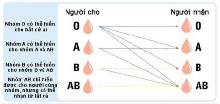 Sự tương hợp của các nhóm máu hiện tại, nhưng nó có thể được xóa bỏ trong tương lai gần
