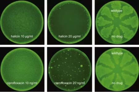 Halicin tỏ ra hiệu quả với ciprofloxacin, một thế hệ kháng sinh cũ. Ảnh minh họa