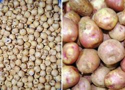 Hạt sen, khoai tây được dùng nhiều cho người viêm loét dạ dày – tá tràng - Ảnh:tno.